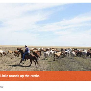 Irish Examiner travel feature on Queensland cattle drive